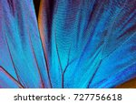 Stock photo wings of a butterfly morpho texture background morpho butterfly 727756618