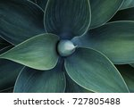 Succulent Plant Agave Abstract...