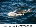 encounter with long finned... | Shutterstock . vector #727806292