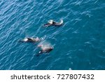 encounter with long finned... | Shutterstock . vector #727807432