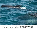 encounter with long finned... | Shutterstock . vector #727807552