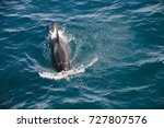 encounter with long finned... | Shutterstock . vector #727807576