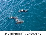 encounter with long finned... | Shutterstock . vector #727807642