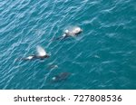 encounter with long finned... | Shutterstock . vector #727808536