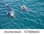 encounter with long finned... | Shutterstock . vector #727808602