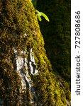 moss | Shutterstock . vector #727808686