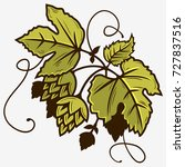 beer hop branch with leaves... | Shutterstock .eps vector #727837516