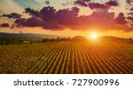 aerial drone view of wineyards... | Shutterstock . vector #727900996