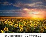 beautiful sunflowers field on...   Shutterstock . vector #727944622
