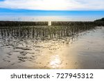 Small photo of Nature of green tree and mud of afforest of mangrove forest in Bang Poo, Thailand Bay