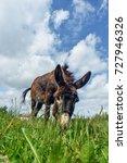 Donkey Grazing In Field Day