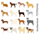 dog  pooch  breed  and other... | Shutterstock .eps vector #727952416