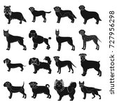 dog  pooch  breed  and other... | Shutterstock .eps vector #727956298