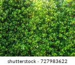 green leaf beautiful nature...   Shutterstock . vector #727983622