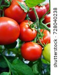 ripe red cherry tomatoes... | Shutterstock . vector #728040238
