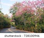 pink ceiba speciosa flowers... | Shutterstock . vector #728100946