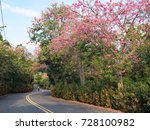 pink ceiba speciosa flowers... | Shutterstock . vector #728100982