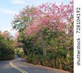 pink ceiba speciosa flowers... | Shutterstock . vector #728104192
