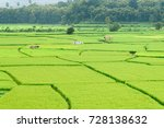 view of green rice paddy... | Shutterstock . vector #728138632