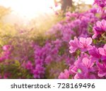 Beautiful light on pink azalea...