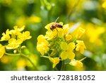 Flying Honey Bee On A Field...