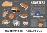 Stock vector hamster breeds icon set flat style isolated on white pet rodents collection create own 728195902