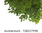 green branch isolated with...   Shutterstock . vector #728217598