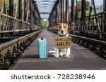 Small photo of lost and homeless jack russell dog abandoned at rail train track on a bridge, with cardboard hanging , waiting to be adopted