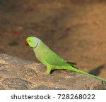 side view of single green... | Shutterstock . vector #728268022