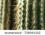 Cactus Close Up. Home Indoor...
