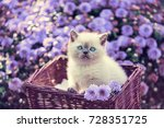 Stock photo cute little kitten in a basket in a garden near violet daisy flowers 728351725