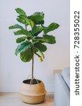 fiddle in a basket | Shutterstock . vector #728355022