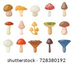Different Mushrooms Isolated O...