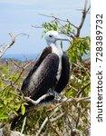 Small photo of Ecuador Vultures in Isla de la Plata