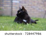 black cat laying on grass | Shutterstock . vector #728447986