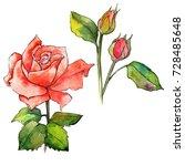 wildflower rose flower in a... | Shutterstock . vector #728485648