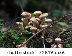 Forest. Mushrooms In The Fores...