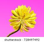 aloe. art gallery fashion...   Shutterstock . vector #728497492