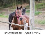 Small photo of ambler horse in nature