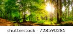 panorama of a beautiful forest... | Shutterstock . vector #728590285