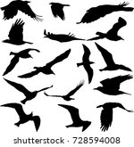birds silhouettes collection  ...   Shutterstock .eps vector #728594008