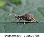 stink bug | Shutterstock . vector #728598706