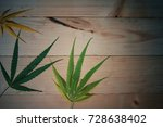 three cannabis leaves on a pine ... | Shutterstock . vector #728638402