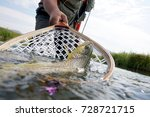brown trout being caught in... | Shutterstock . vector #728721715