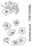 sakura vector isolate on white...   Shutterstock .eps vector #728744386