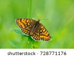 wild beautiful butterfly  heath ... | Shutterstock . vector #728771176