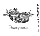 hand drawn pomegranate. sketch... | Shutterstock . vector #728779255