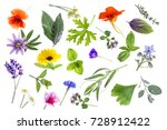 collection of fresh medicinal... | Shutterstock . vector #728912422