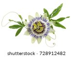 Small photo of blue passion flower isolated on white
