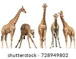 set of five giraffe portraits ... | Shutterstock . vector #728949802